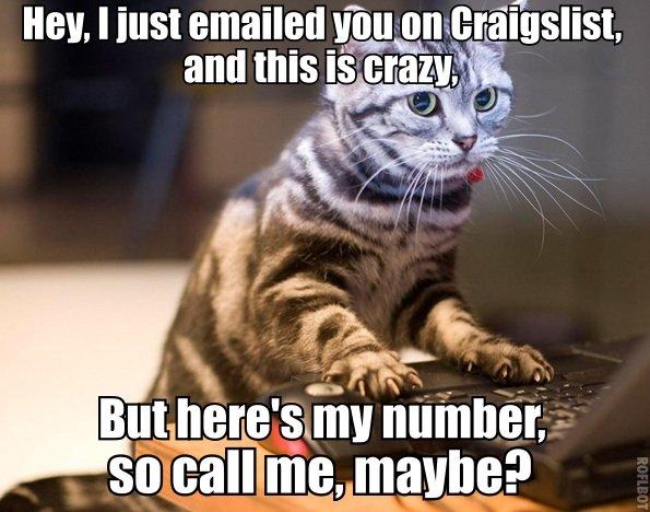 craigslist cat