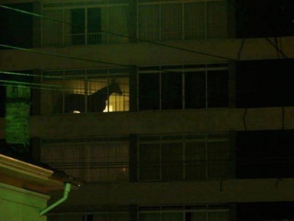 horse in hotel